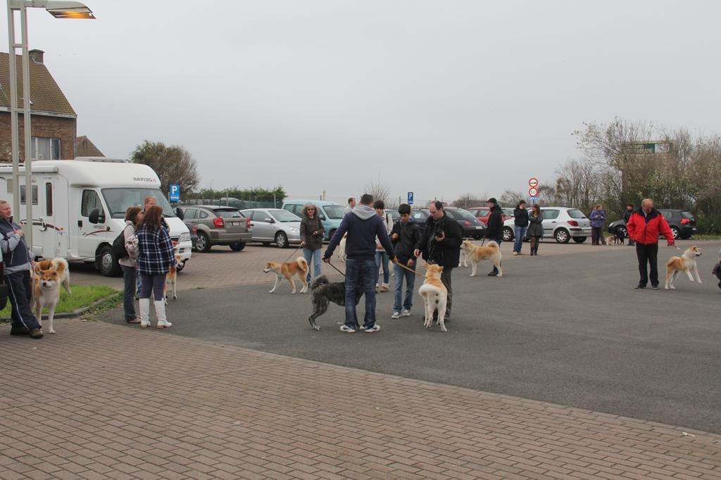 Wandeling/Promenade Akita club 30 octobre 2011