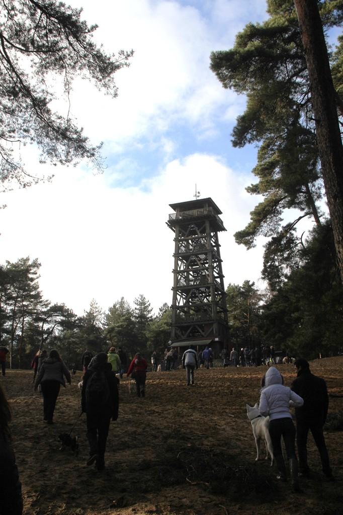 Balade - Wandeling Akitaclub décembre 2012
