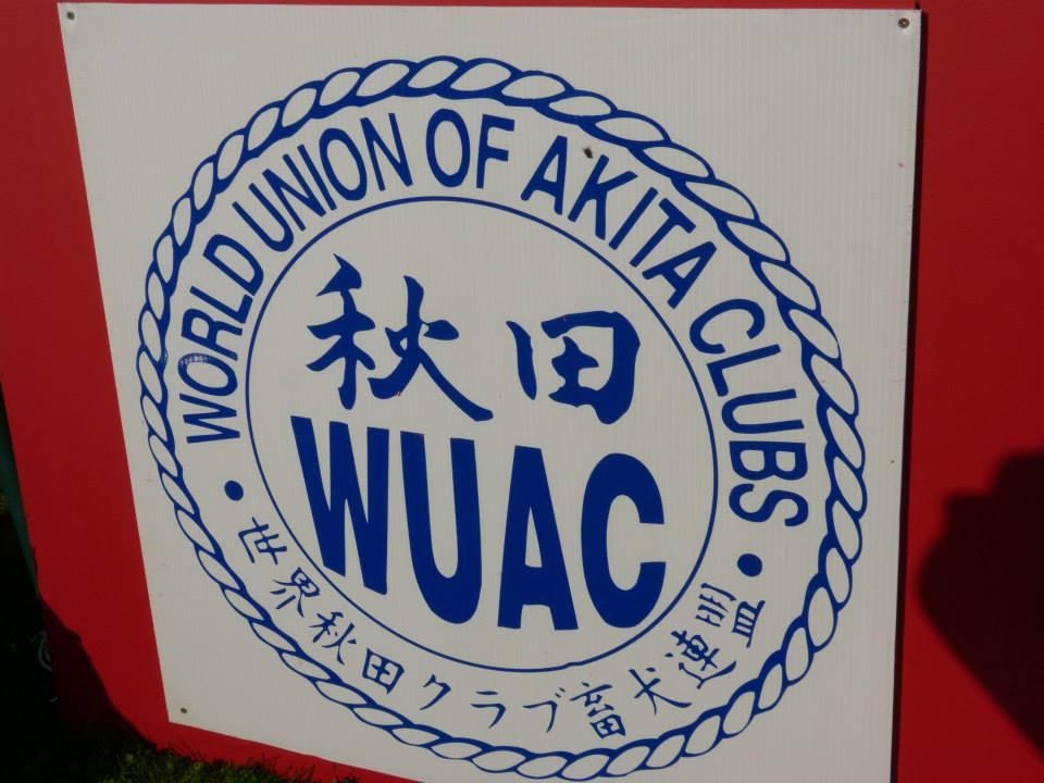 Akita Club Show 2014
